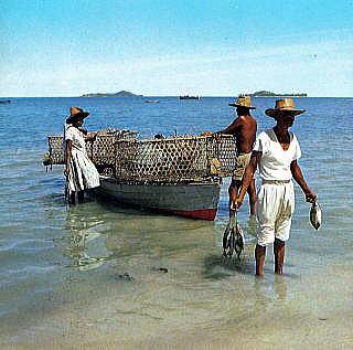 インド洋に浮かぶ自然と共生する...